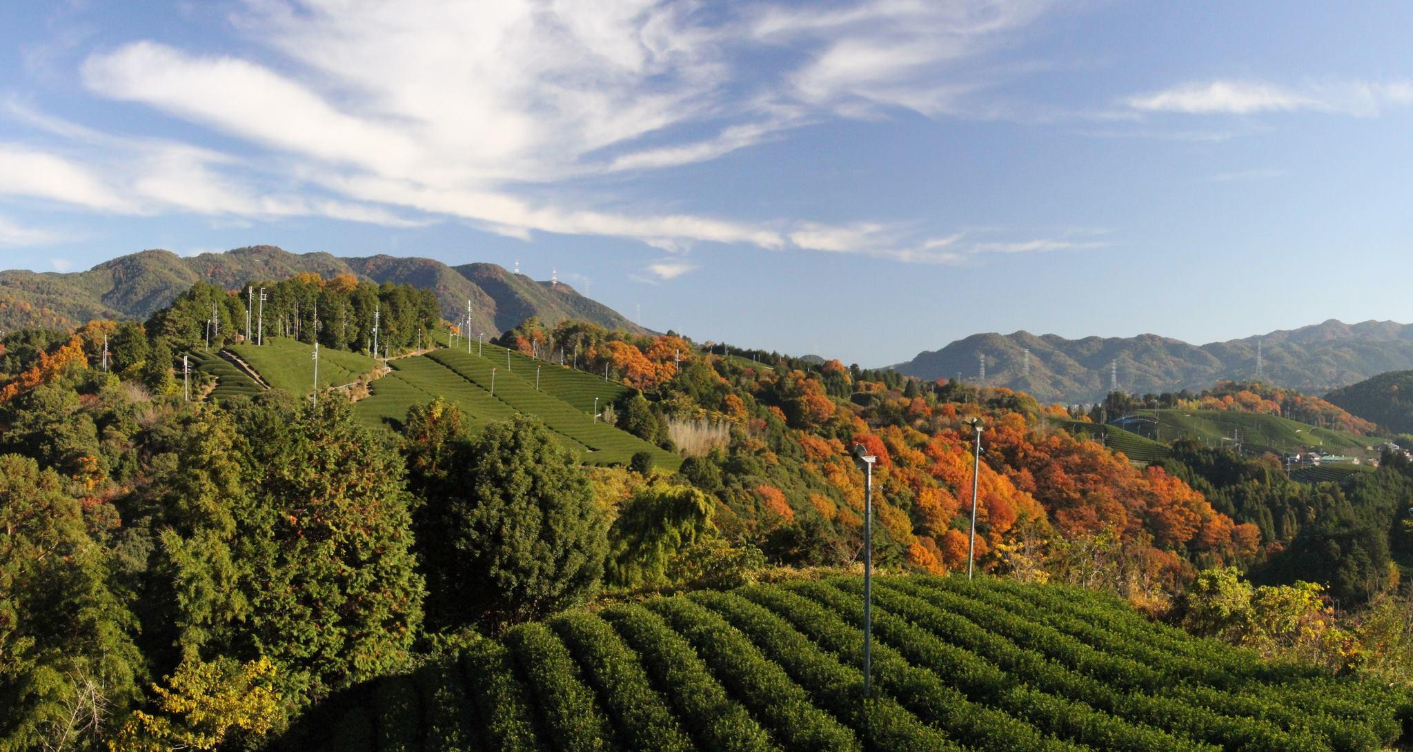 和束町秋の風景