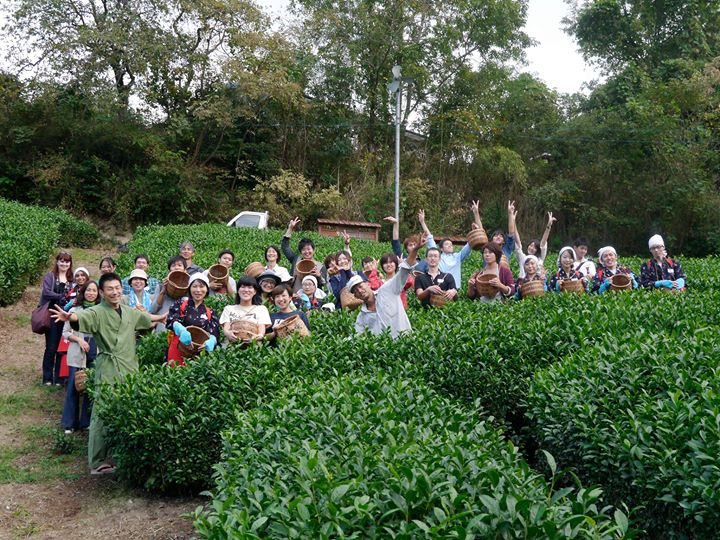 茶畑ツアー2015 お申し込み