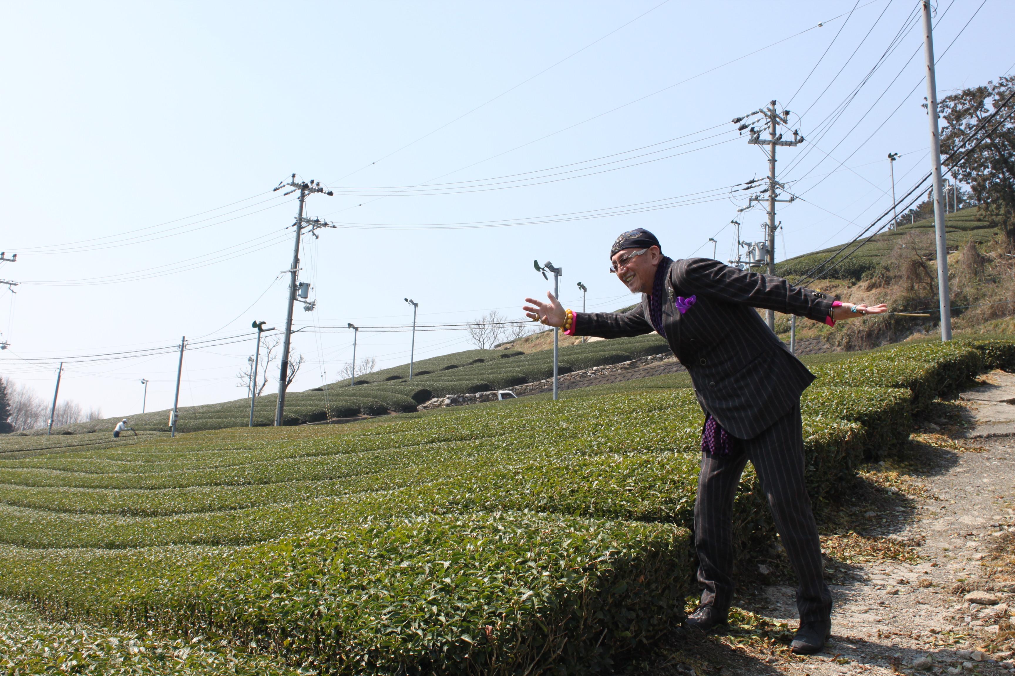 茶畑ウォーク