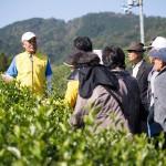 茶畑ツアー申込み 2017年 (11月4日~5日)