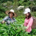 SERMLUK THAI TEA / サームラックタイティー