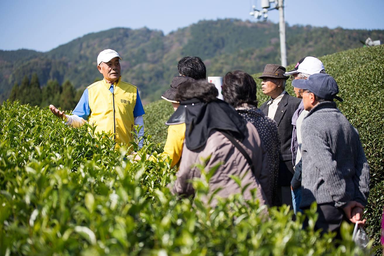 <!--:ja-->茶畑ツアー申込み 2017年 (11月4日~5日)<!--:-->